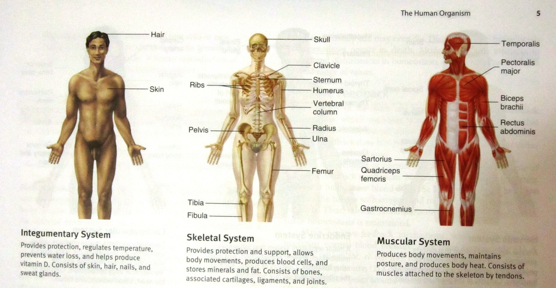 Human Organism Chemical Basis Of Life Cell And Tissues Human
